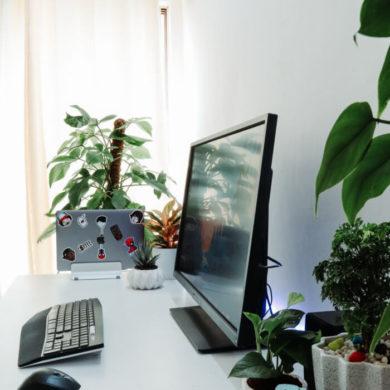 Hosting WordPress - współdzielony i szybki. Jaki i jak wybrać hosting?
